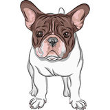 Vector sketch domestic dog French Bulldog breed Royalty Free Stock Photos