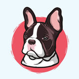 Closeup Portrait of the Domestic Dog French Bulldog Breed on the White Background. Hand Drawn Line Art Stock Photography