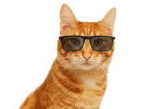Closeup portrait of funny ginger cat wearing eyeglasses stock images