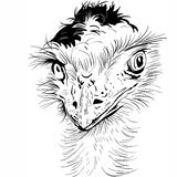 Closeup portrait of funny Ostrich Bird Royalty Free Stock Photography