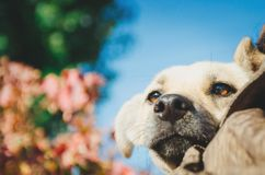Closeup portrait photo of an adorable mongrel dog. Close-up royalty free stock images