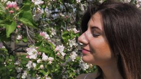 Closeup young caucasian woman sniffs flowers of blooming apple trees in garden. Closeup portrait young beauty Caucasian woman touching and sniffing the smell of stock video