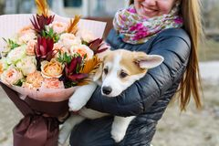 Closeup portrait of young woman with flowers and with corgi puppy on city street background royalty free stock photography