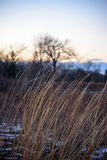 Closeup of prairie grass bending in wind at sunset in winter Stock Images