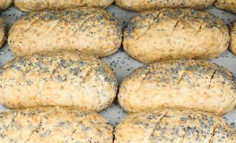 Closeup of proofing whole grain rolls on baking paper. With poppy seeds Stock Photo