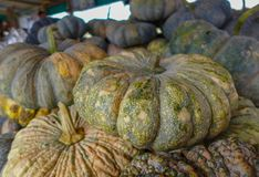 Closeup pumkin in the market.  stock images