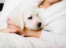 Closeup of puppy on the hands of woman Stock Photos