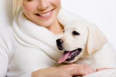 Closeup of puppy of labrador on the hands of woman Royalty Free Stock Photos