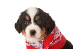 Closeup of a puppy Stock Photo