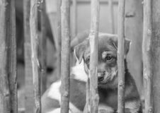 Closeup brown puppy in wood cage background in black and white tone. Closeup puppy in wood cage background in black and white tone Stock Photos
