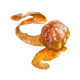 The closeup purified tangerine with a skin on white background, watercolor illustration. In hand-drawn style Stock Illustration