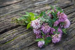 Purple Clover flower on wooden table Royalty Free Stock Photography