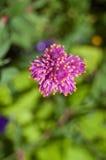 Closeup purple flower  Stock Photos