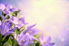Closeup of purple flowers Stock Photo