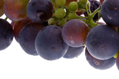 Closeup of purple grapes Stock Image