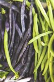 Closeup of Purple and Green String Beans Stock Images
