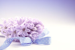 Closeup on purple hyacinth on gradient background, text space Stock Photo