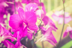 closeup purple orchid Royalty Free Stock Images
