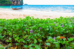 Closeup of purple tropical flowers on the beach Royalty Free Stock Photo