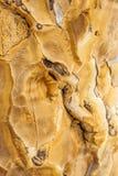 Closeup of a quiver tree bark stock photo