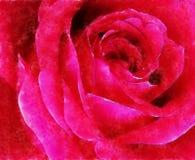 Closeup röda Rose Fine Art vektor illustrationer
