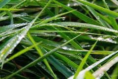 Closeup of raindrops on green grass meadow in Brüggen, Germany stock image
