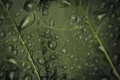 Closeup of Raindrops on a Green leaf Royalty Free Stock Images