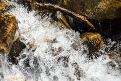 Closeup rapid waters of river strong Royalty Free Stock Photo