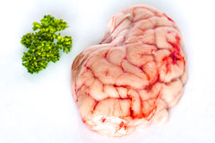 Closeup of raw brain with Parsley stock photography