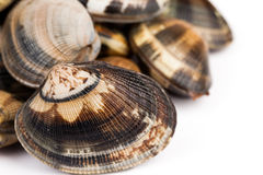 Closeup Of Raw Clams Royalty Free Stock Image