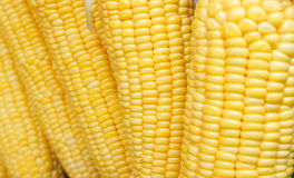 Closeup of raw corn Royalty Free Stock Photos