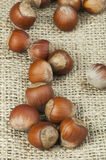 Closeup raw hazelnuts on burlap Stock Photo