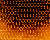 Closeup raw organic Honeycombs . Newly pulled honey bee honeycom Royalty Free Stock Photography