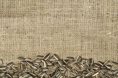 Closeup raw sunflower seeds on burlap Royalty Free Stock Images