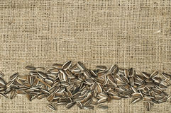 Closeup raw sunflower seeds on burlap Stock Image