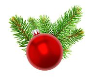 Bauble on Christmas tree. Closeup of red bauble on branch of a Christmas tree showing needles, white background Royalty Free Stock Photography
