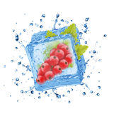 Closeup of red currant in ice cube Royalty Free Stock Photo
