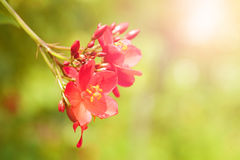Closeup of red flower with shallow depth of field Royalty Free Stock Images