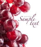 Closeup of red grape berries Royalty Free Stock Images