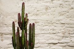 Spiky Cactus against a white stucco wall Stock Photo
