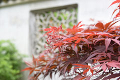 Closeup of red maple and blurred traditional architecture Stock Photography