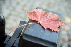 Red maple leaf in metallic grid in garden Stock Image