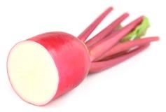 Closeup of red radish Royalty Free Stock Image