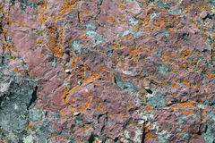 Closeup of Red Rock Covered in Orange Lichen. Closeup of Red Rock Covered in Orange and Gold Lichen royalty free stock photography