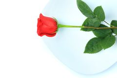 Closeup of red rose on white plate Stock Images