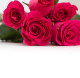 Closeup of red roses bouquet with copy-space, on white Royalty Free Stock Photo