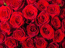 Closeup of Red Roses Royalty Free Stock Photography