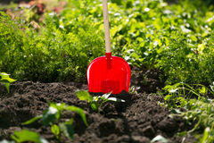 Closeup of red spade stuck in garden bed Royalty Free Stock Photography