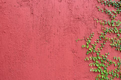 Closeup of Red wall partly covered with green plant Royalty Free Stock Photos