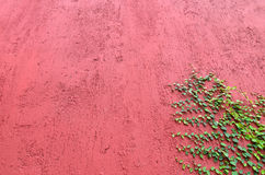 Closeup of Red wall partly covered with green plant Stock Photo